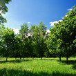 Green glade in forest — Stock Photo