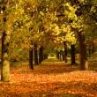 Autumn park — Stock Photo #2409566
