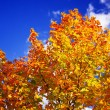 Stock Photo: Colored autumn tree