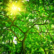 Crone of the tree with sun — Foto Stock