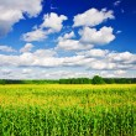 Landscape - corn field — Stock Photo
