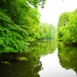 River in forest — Foto Stock