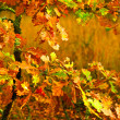 Small autumn oak tree — Stock Photo #2450505