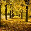 Autumn avenue in park — Stock Photo #2464216