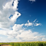 Edge of a corn field — Stock Photo