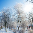 Frosty morning in park — Stockfoto