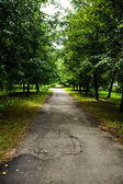 Green avenue in park — Stock Photo