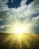 Sumrise on a wheat field — Stock Photo
