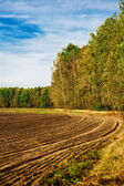 The ploughed field at edge of a forest — Stock Photo