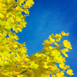 Yellow branch of autumn tree — Stock Photo #2475419