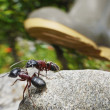 Garden ants, survival — Stock Photo