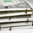 Stock Photo: Ants counting dollars
