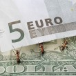 Stock Photo: Ants raising euro