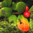Ants and cowberry — Stock Photo
