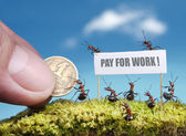 Ants demand payment for work — Stock Photo