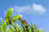 Anecdotes of ants — Stock Photo