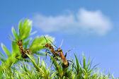Anecdotes of ants — Stock Photo