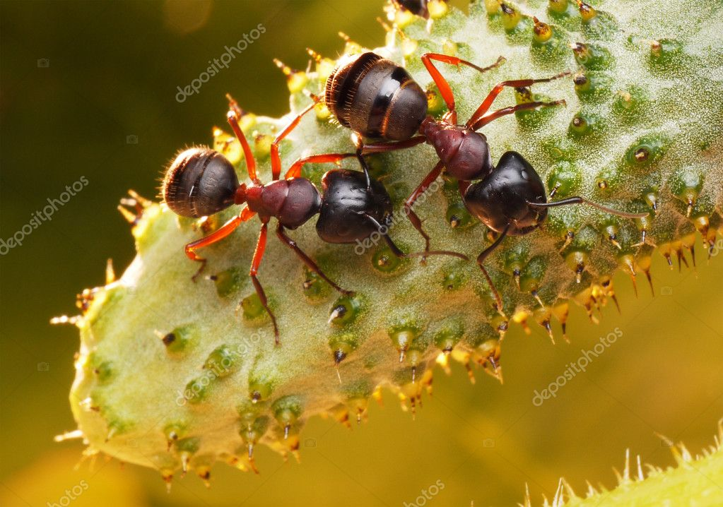 Garden ants and new-born cucumber in morning light  Stock Photo #1013733
