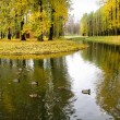 Autumn, park, pond, ducks - Stock Photo