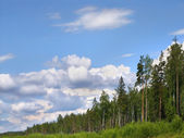 Forest skyline — Stock Photo