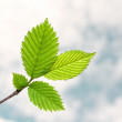 Fresh branch and spring sky — Stock Photo #1055839