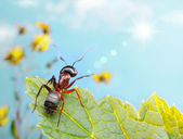 Garden ant catching sun beam — Stock Photo