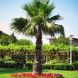 Stock Photo: Palm in garden