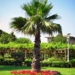 Palm in garden — Stock Photo #1369208