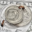 Keep a change, ants and money — Stock Photo