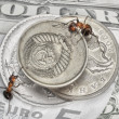 Keep change, ants and money — Stock Photo #1417000