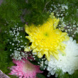 Chrysanthemum and aster — Stock Photo