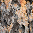 Surface of a pine bark — Stock Photo #1786615