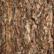 Surface of a pine bark — Stock Photo #1786792