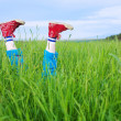 Legs, in a green grass — Foto de Stock