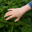 Hand and nettle — Stock Photo