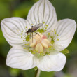 The fly on a flower — Stock Photo