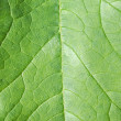 Foliage — Stock Photo #1789727