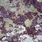 Na powierzchni skały — Zdjęcie stockowe