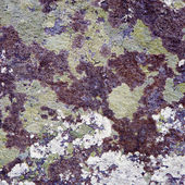 The surface of a rock — Stock Photo