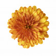 Stock Photo: Big orange flower