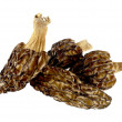 Dried morels on a white — Stock Photo