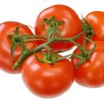 Tomato — Stock Photo #1796289