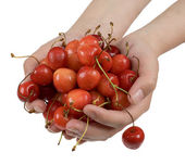 Sweet cherry in palms — Stock Photo