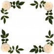 Stock Photo: Frame of sprigs tea-rose