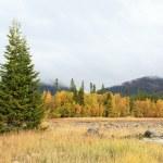 Autumn landscape with a fir — Stock Photo