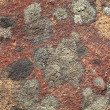 Stock Photo: Stone covered by lichen background