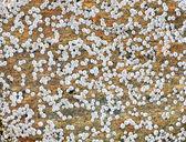 Sea animals on a rock surface — Stockfoto
