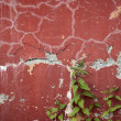 Stock Photo: Old wall with cracks and nettle runaways