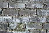 Old brick grey wall with a mould texture — Stock Photo
