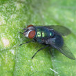Royalty-Free Stock Photo: Fly sitting on green sheet of plant